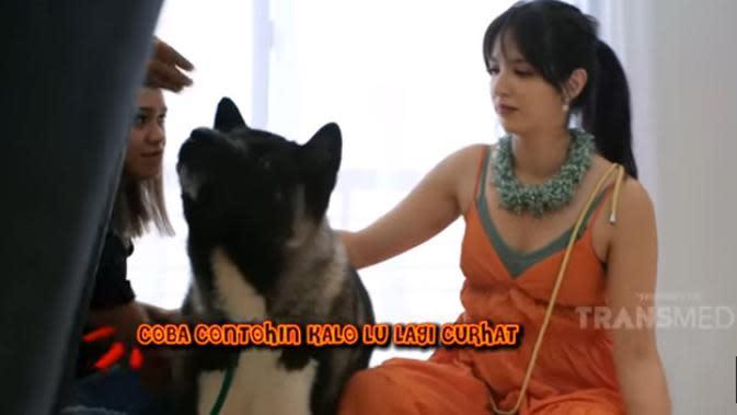 Nia menambahkan, saat sedang curhat ke anjing tersebut, Maxi juga menunjukkan kesedihannya. Hal tersebut yang membuat Nia makin sayang dengan anjing impor dari Thailand tersebut. (Youtube/ TRANS TV Official)
