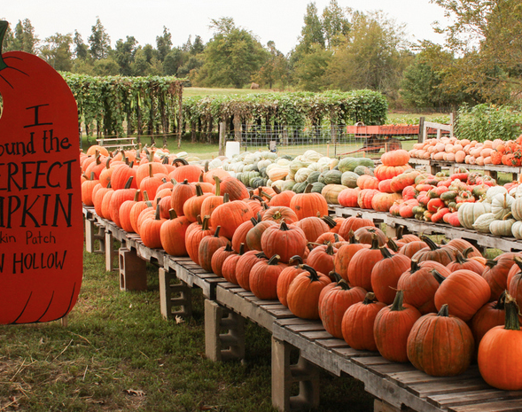 "<p>From Horror in the Hollow and zip-lining to the Friendly forest and Pumpkin Hollow Putt-Putt, <a href=""https://www.pumpkinhollow.com/"" target=""_blank"">Pumpkin Hollow farm</a> in <a href=""https://www.tripadvisor.com/Tourism-g31856-Piggott_Arkansas-Vacations.html"" target=""_blank"">Piggott, Arkansas</a>, is packed with activities for every age.</p><p><a class=""body-btn-link"" href=""https://go.redirectingat.com?id=74968X1596630&url=https%3A%2F%2Fwww.tripadvisor.com%2FTourism-g31856-Piggott_Arkansas-Vacations.html&sref=https%3A%2F%2Fwww.countryliving.com%2Flife%2Ftravel%2Fg21273436%2Fpumpkin-farms-near-me%2F"" target=""_blank"">PLAN YOUR TRIP</a></p>"