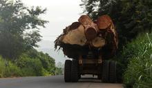 西方飲食習慣導致每人每年損失四棵樹