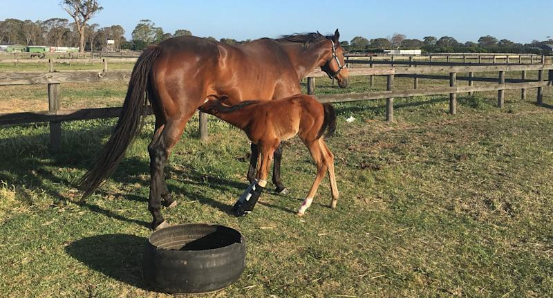 Nathan McPherson, from Carrum Downs, is appealing for the return of his foal Holly who wears two casts on her legs. She was stolen and was born with contracted tendons. Source: Facebook/ Nathan McPherson