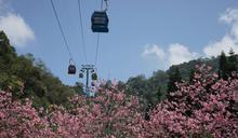 日月潭櫻花季將登場 周邊推薦8處景點 (圖)