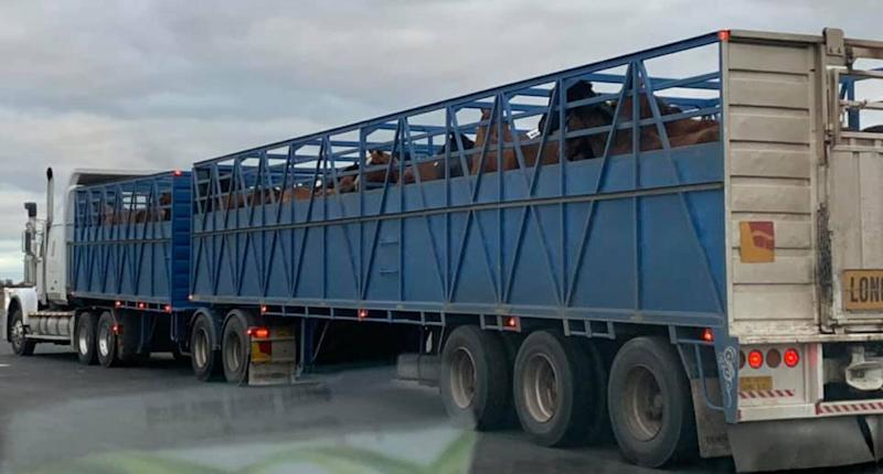 A woman claims a number of horses sold at sale yards in Victoria's north need to be saved by Wednesday or they will be killed at knackeries. Source: Facebook/ Mikaela Smith