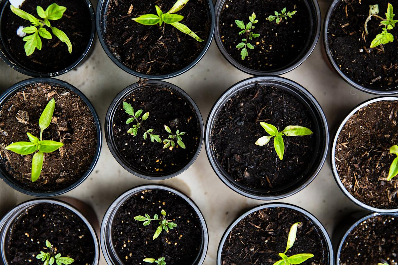 <p>If the soil in your garden is healthy, then you'll be able to produce tasty fruits and vegetables. As a gardener, having mineral-rich soil should be your top priority. </p>