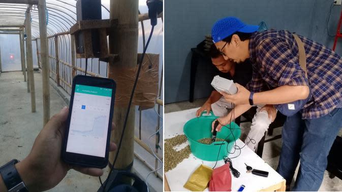 XL Axiata menghadirkan solusi IoT untuk memantau kulitas kopi pascapanen (Foto: XL Axiata)
