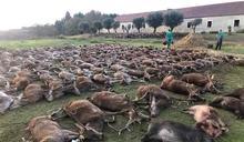 觀光打獵區大災難 16人殺光500多隻動物