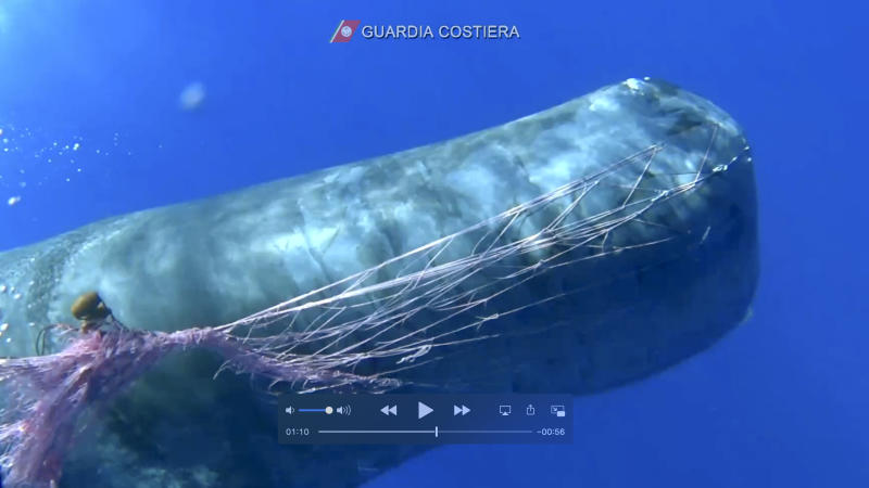Italy Trapped Whale