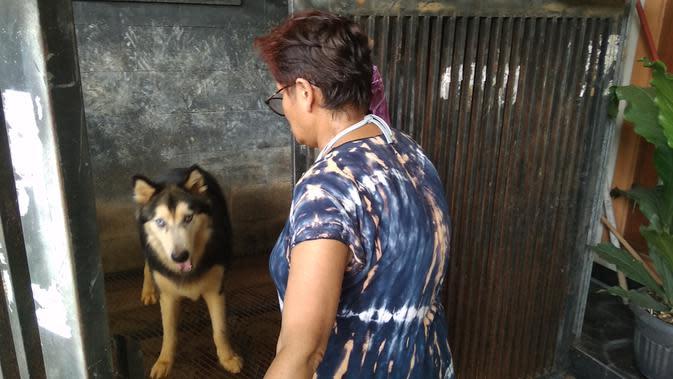 Pencurian Anjing Ras Marak di Perumahan Rawalumbu Bekasi
