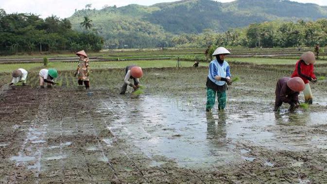 Tahun 2021, Kementan Siap Terapkan Asuransi Pertanian Serempak