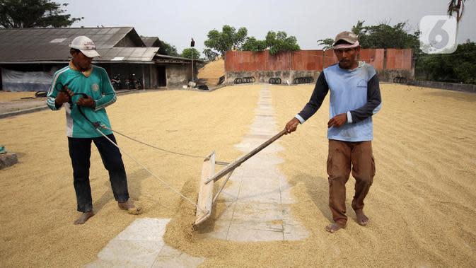 Pekerja menjemur gabah di Kabupaten Tangerang, Banten, Selasa (14/7/2020). Selama semester I 2020, Perum Bulog telah merealisasikan serap gabah petani secara langsung sebanyak 700 ribu ton setara beras guna meningkatkan ketahanan stok cadangan beras. (Liputan6.com/Angga Yuniar)