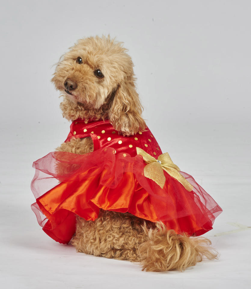 "<p>The furriest member of the family must be dressed to impress this Christmas, and what better way than by getting your pooch a festive coloured dress. <br />This bright red number is available in available in S, M & L. <br /><a rel=""nofollow"" href=""https://www.petbarn.com.au/christmasgiftguide#view=catalogue2&saleId=24873&page=1"">Photo: Petbarn</a> </p>"