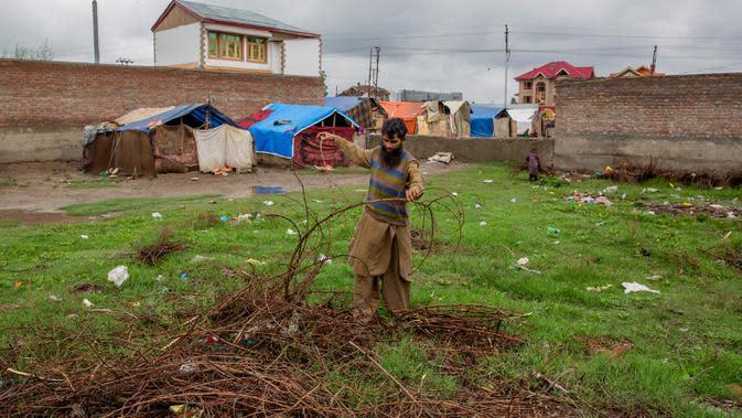 Pria pengembara Kashmir Bakarwal membawa kayu bakar dari ladang terdekat di luar kamp sementara di pinggiran Srinagar, India, 31 Agustus 2020. Suku Bakarwals adalah kaum penggembala nomaden di Jammu Kashmir, yang mengembara mencari padang rumput yang baik untuk ternak mereka. (AP Photo/Dar Yasin)