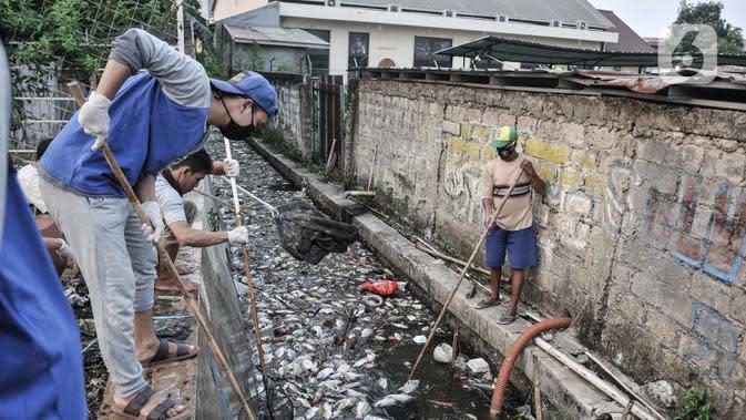 Warga membersihkan bangkai ikan Mujair yang terbawa hingga selokan permukiman di Lio, Depok, Jawa Barat, Kamis (20/8/2020). Sejak dua hari terakhir ribuan ekor ikan Mujair mati dan memenuhi Situ Rawa Besar yang menurut warga setempat disebabkan oleh faktor cuaca. (merdeka.com/Iqbal S. Nugroho)