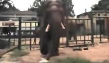 陸動物園「亂象」!遊客丟塑膠袋 害大象誤食