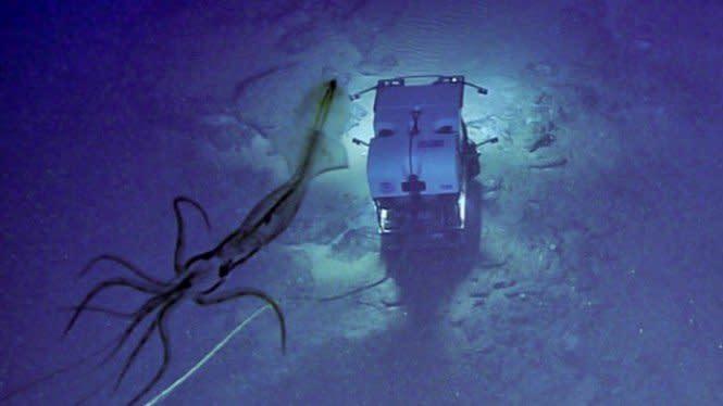 Cumi-cumi Raksasa seperti Putri Duyung Terpotret di Laut Dalam