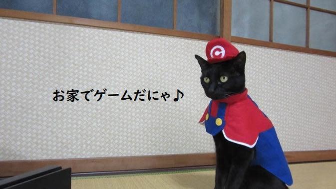 Chocola, kucing cosplayer di Jepang yang punya lebih dari 100 kostum unik. (dok. Twitter/@kigurumicyokor1/https://twitter.com/kigurumicyokor1/status/1256840608955555843)