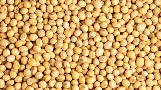 美食、健康與環保:有關大豆 幾個影響深遠的重要問題