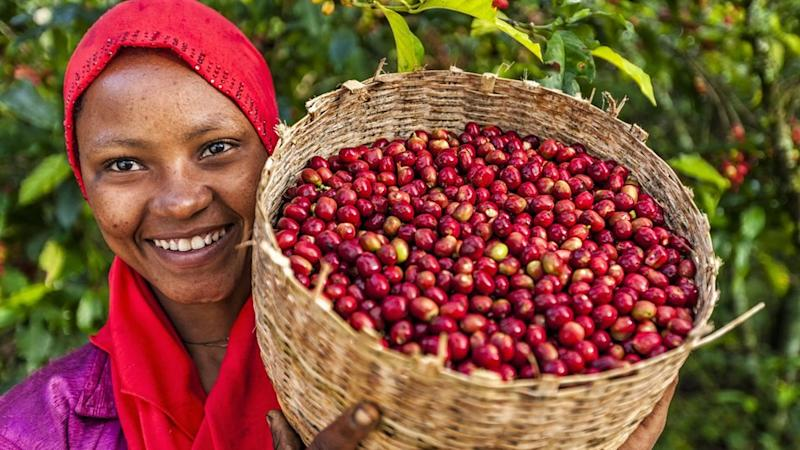 A woman in Ethiopia shows a basket of freshly picked coffee cherries