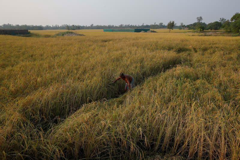 India's controversial farm bills become law despite protests