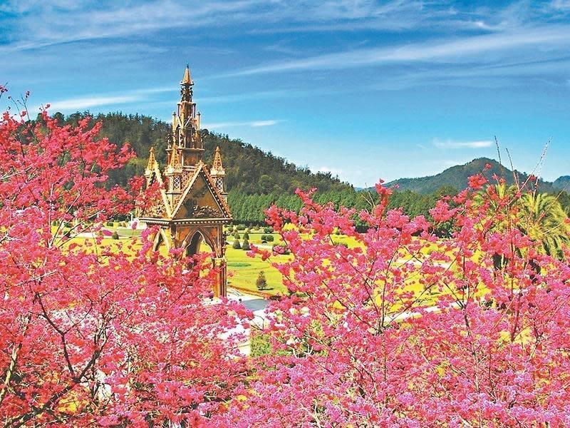 Top 4 九族文化村櫻花季