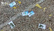 以色列下「大麻雨」 民眾硬闖馬路也要撿