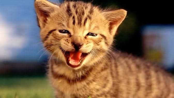Potret Lucu Kucing Saat Tersenyum Ini Bikin Ketawa Sendiri (sumber:boredpanda.com)