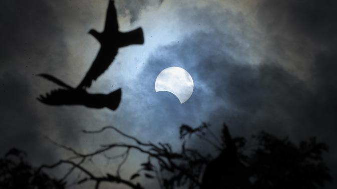 Burung-burung terbang saat gerhana matahari parsial di Hyderabad, India, Kamis (26/12/2019). Gerhana matahari yang terjadi pada hari ini dapat diamati dari sejumlah wilayah mulai Afrika timur, seluruh Asia, Samudera India, dan Australia utara. (AP Photo/Mahesh Kumar A.)