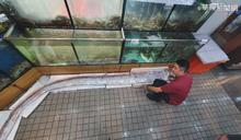 台東規模5.4震 五米長地震魚現身宜蘭