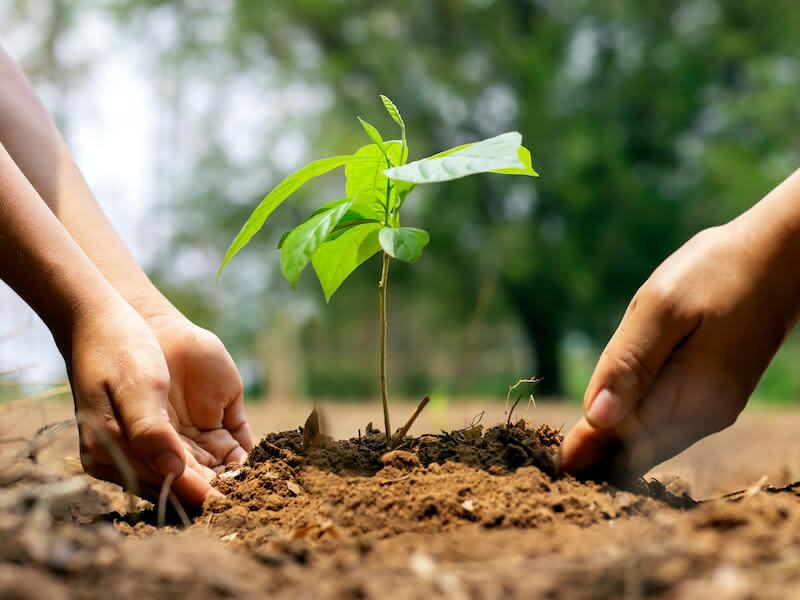 Yahoo響應減碳環保,率先種下2000棵樹!