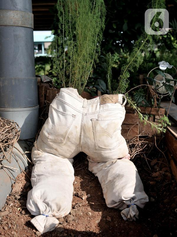 Salah satu tanaman milik Pungki (53) di kolong Tol Becakayu, Kalimalang, Jakarta, Kamis (4/6/2020). Jenis tanaman yang ditanam di kebun ini mulai dari bunga, sayuran, hingga buah yang hasil panennya dapat dinikmati siapa saja. (merdeka.com/Iqbal S. Nugroho)