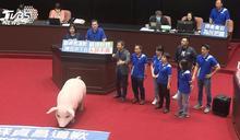 萊豬9項行政命令過關 政院:萊劑規定全國要一致