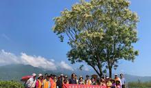 池上神之米田區吸引觀光客拍照打卡 (圖)