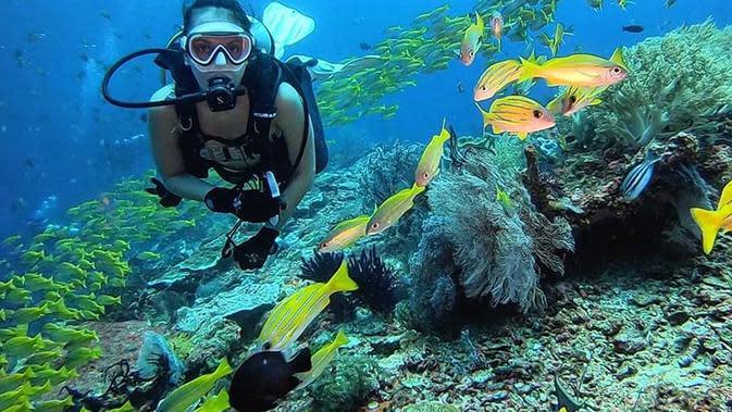 Keindahan laut Raja Ampat memang tak perlu diragukan lagi. Widika pun bertemu dengan banyak spesies laut seperti saat bertemu dengan ikan berwarna kuning di sekitarnya. Aktris yang membintangi Sebelum Iblis Menjemput Ayat 2 ini terlihat sangat menikmati divingnya. (Liputan6.com/IG/@wdkds)