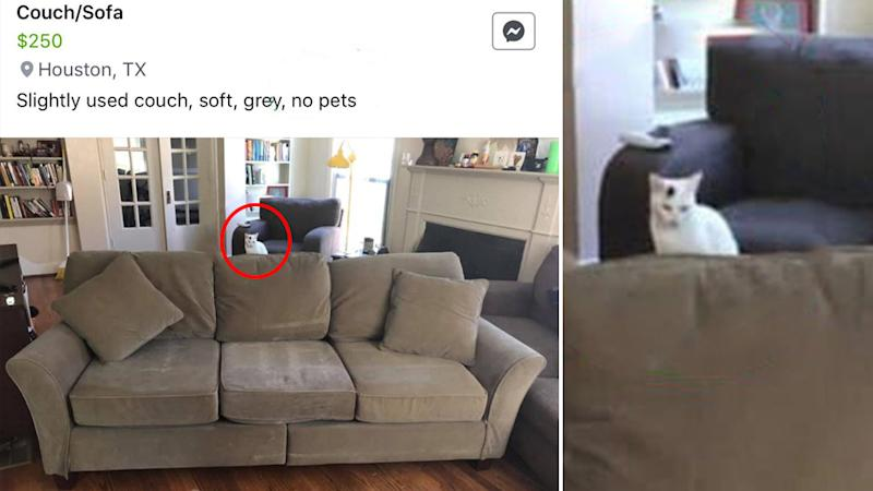 """The lounge was advertised for sale as """"no pets"""" but there is a cat hidden in the photo."""