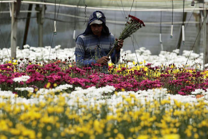 Costa Rica farmers destroy flowers as coronavirus spoils exports