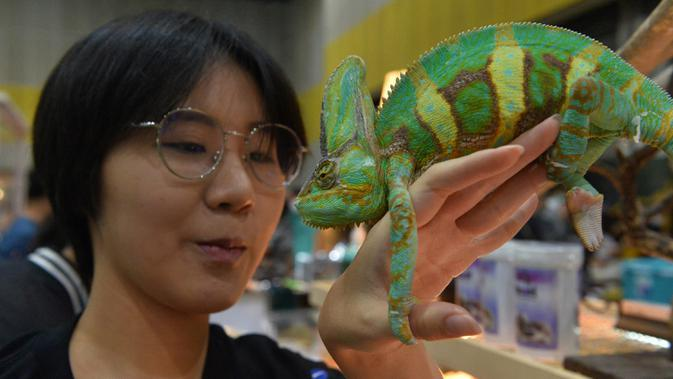 Seorang wanita memegang seekor chameleon dalam Pameran Hewan Peliharaan Thailand 2020 di Bangkok International Trade and Exhibition Center (BITEC), Bangkok, Thailand, 3 September 2020. Ajang yang digelar selama empat hari itu akan berlangsung hingga 6 September. (Xinhua/Rachen Sageamsak)