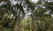 漫遊千年魔法森林 太平山步道美景吸睛 (圖)