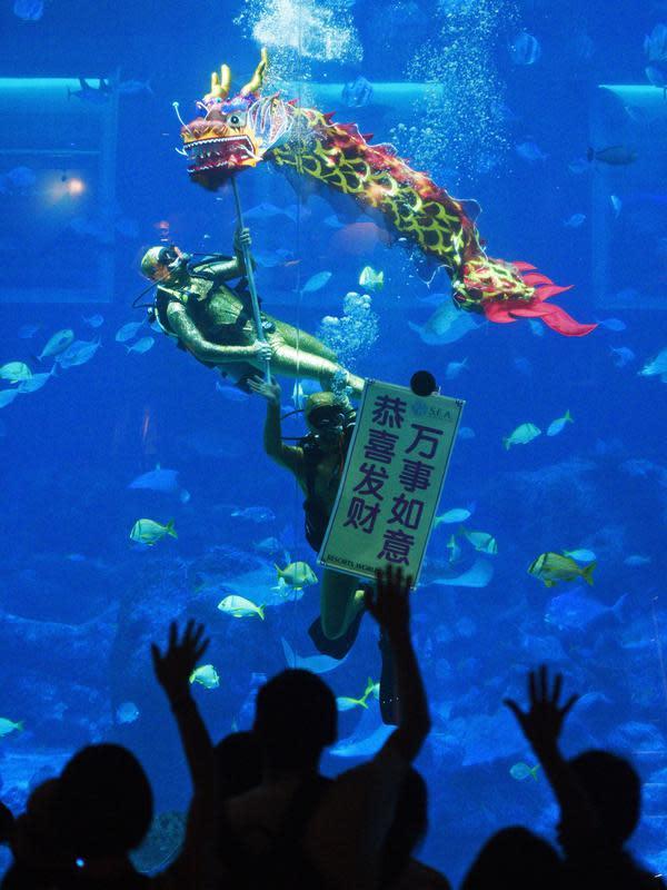 Penyelam menampilkan tarian naga dalam air untuk merayakan kedatangan Tahun Baru Imlek di S.E.A. Akuarium, Singapura, Selasa (14/1/2020). Tahun Baru Imlek 2020 jatuh pada 25 Januari. (Xinhua/Then Chih Wey)