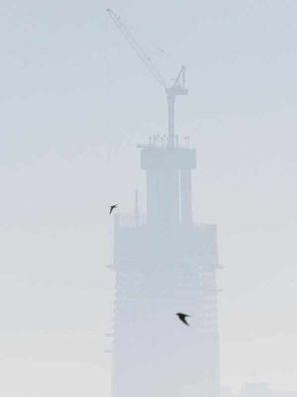 Burung terbang menenbus kabut asap yang menutupi Sydney pada Selasa (19/11/2019). Sydney diselimuti kabut asap saat kebakaran hutan di timur Australia menyebabkan tingkat polusi di kota terbesar Australia itu naik tajam. (AP Photo/Rick Rycroft)