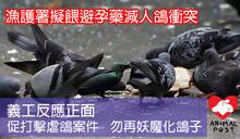 漁護署擬餵鴿子吃避孕藥減人鴿衝突 義工反應正面 倡推教育勿妖魔化鴿子