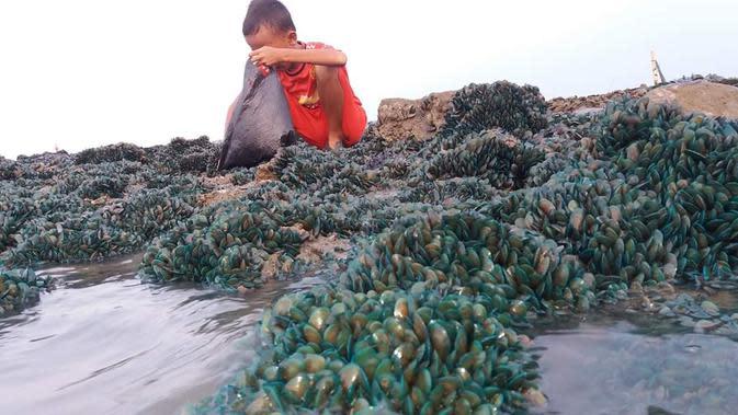 Pertamina Gandeng IPB Teliti Fenomena Kerang Hijau di Pantai Karawang