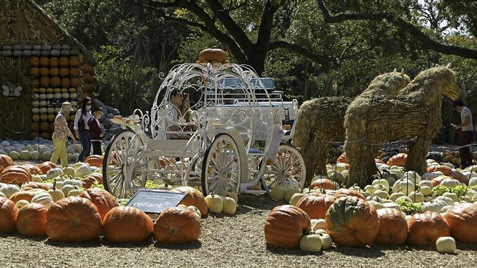 Sepasang pria dan wanita foto dalam kereta labu di Desa Labu Dallas Arboretum, Texas, Amerika Serikat, 4 Oktober 2020. Desa Labu di Dallas Arboretum yang mendapat pengakuan nasional menghadirkan rumah-rumah labu dan berbagai objek kreatif dari 90.000 lebih labu, kundur, dan squash. (Xinhua/Dan Tian)