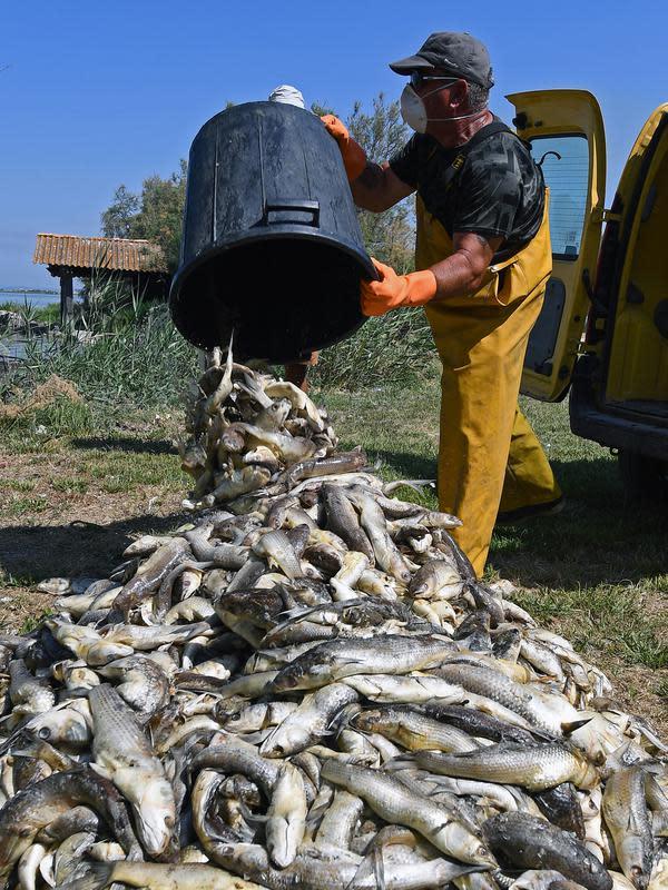 Seorang pria membuang ikan mati dari ember di Laguna Etang de Berre, dekat Marseille, Prancis (1/7/2019). Matinya beberapa ton ikan disebabkan penurunan kadar oksigen di Laguna Etang de Berre yang dipicu gelombang panas dalam sepekan hari terakhir. (AFP Photo/Boris Horvat)