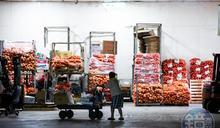 【全台三級警戒】新北板橋、三重果菜公司全員快篩 3626人報告出爐