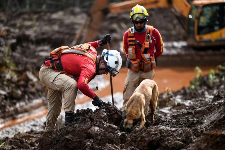 A sniffer dog locates body parts as emergency crews continued the slow process of picking through the mud looking for bodies in May 2019, 99 days after the collapse of the Corrego do Feijao Dam