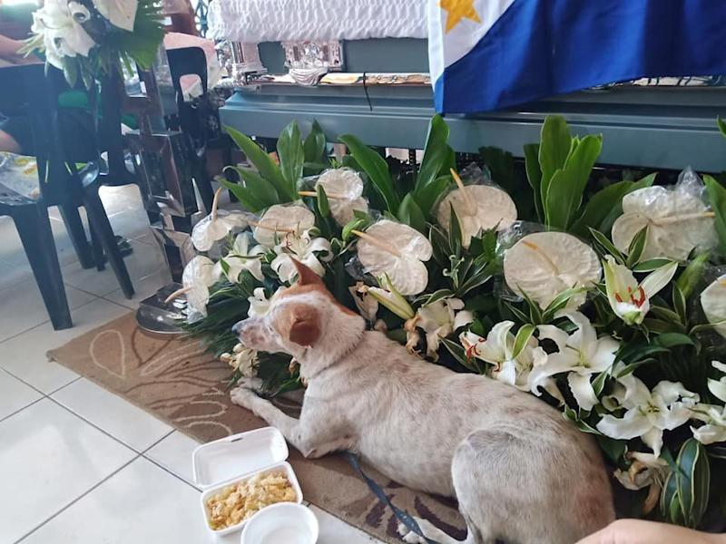 The photograph of Buboy the dog lying beside Carmelito Marcelo's coffin in the Philippines at the teacher's wake. Source: Facebook / Ma Kristina Paola Demafelix