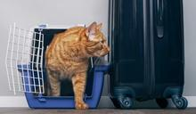 推薦十大貓用外出包人氣排行榜【2021年最新版】