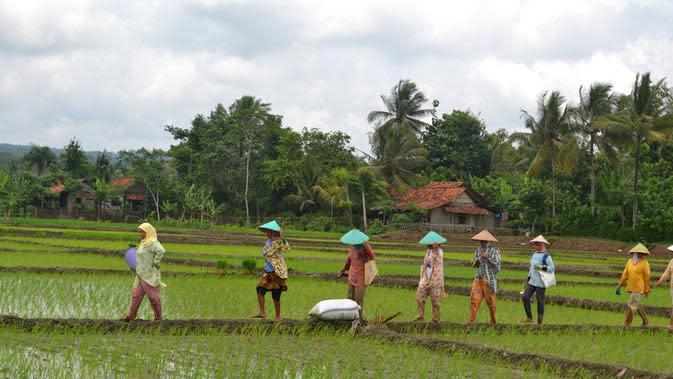 Pemandangan khas pedesaan, petani dan sawah, di Banyumas, Jawa Tengah. (Foto: Liputan6.com/Muhamad Ridlo)