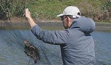 濁水溪出海口非法鳥網 成保育鳥塚