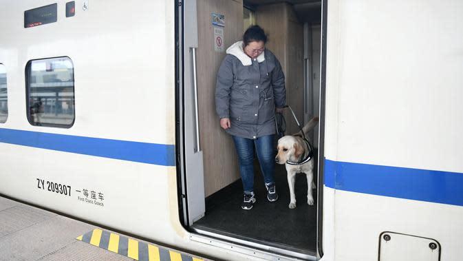 Seekor anjing pemandu dan pelatihnya turun dari kereta di Stasiun Kereta Selatan Baoji di Baoji, Provinsi Shaanxi, China pada 12 Januari 2020. Anjing-anjing pemandu dilatih untuk beradaptasi dengan kereta peluru guna membantu penumpang tunanetra selama arus mudik Tahun Baru Imlek. (Xinhua/Li Yibo)