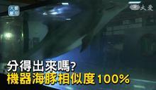 機器海豚超逼真!